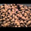 ENSALADA DE ALUBIAS BLANCAS (BLACK EYED PEAS)