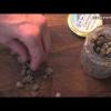 FUSILLI CON TOMATE CRUDO (Y ALCAPARRAS EN SAL)