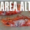 Restaurante Marea Alta en Barcelona
