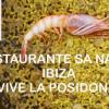 Restaurante Sa Nansa en Ibiza I ¡Vive la #posidonia!